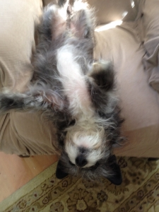 Buster in his favorite sleeping position!