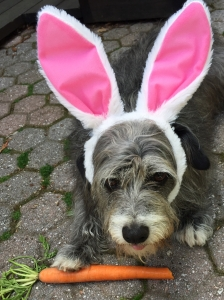 Buster is right side up for Easter.